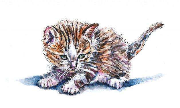 Day 20 - Kitten Inktober Watercolor - Doodlewash