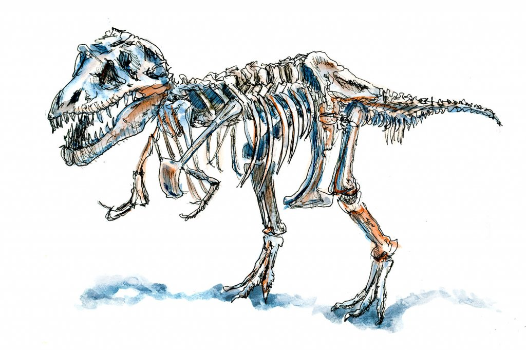 Day 25 - Sue Dinosaur Chicago Sketch Illustration T-Rex - Doodlewash