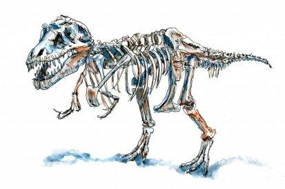 Day 25 - Sue Dinosaur Chicago Sketch Illustration T-Rex - Doodlewash