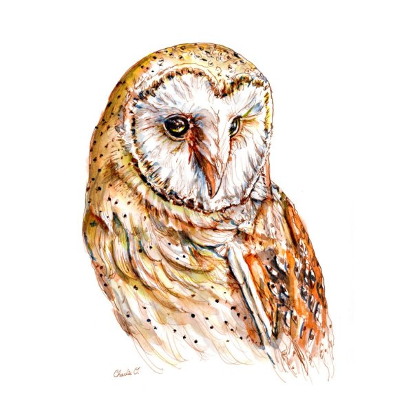 Barn Owl Watercolor Print For Sale