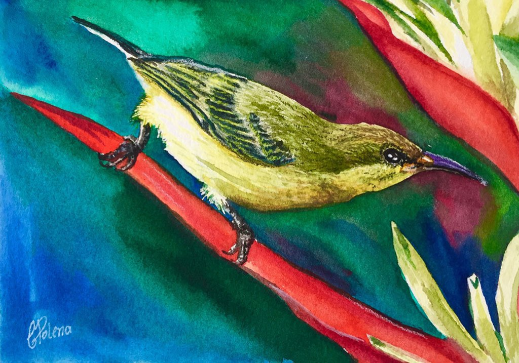 Watercolor Bird Painting by Claudia Polena - Doodlewash