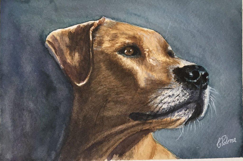 Watercolor Dog Portrait Painting by Claudia Polena - Doodlewash