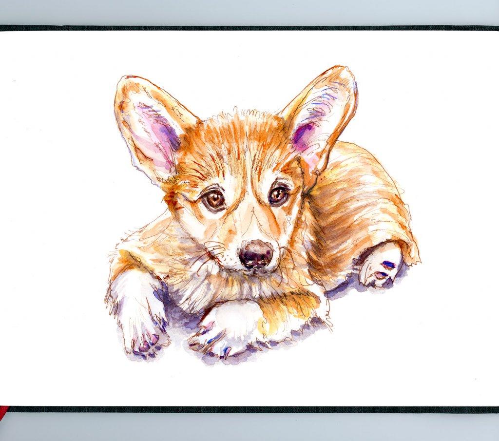 Day 14 - Corgi Puppy Watercolor Pet Portrait Sketchbook - Doodlewash