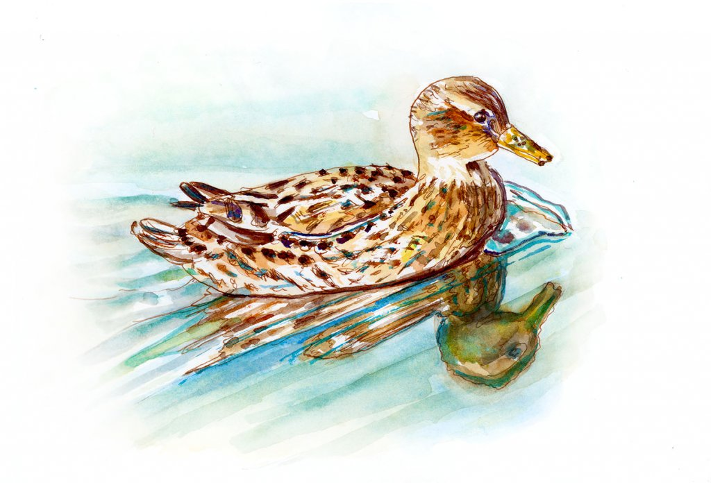 Day 17 - Duck Watercolor Reflections - Doodlewash