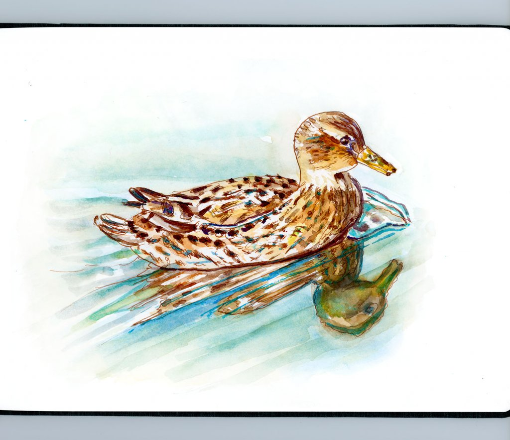 Day 17 - Duck Watercolor Reflections Sketchbook - Doodlewash