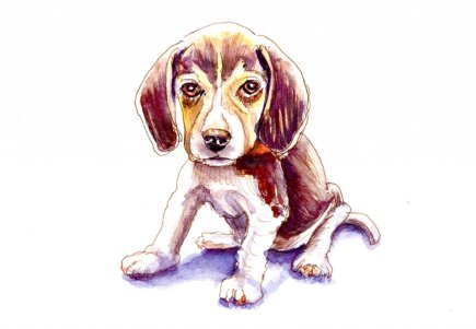Day 4 - Beagle Watercolor Illustration Furry Friend - Doodlewash