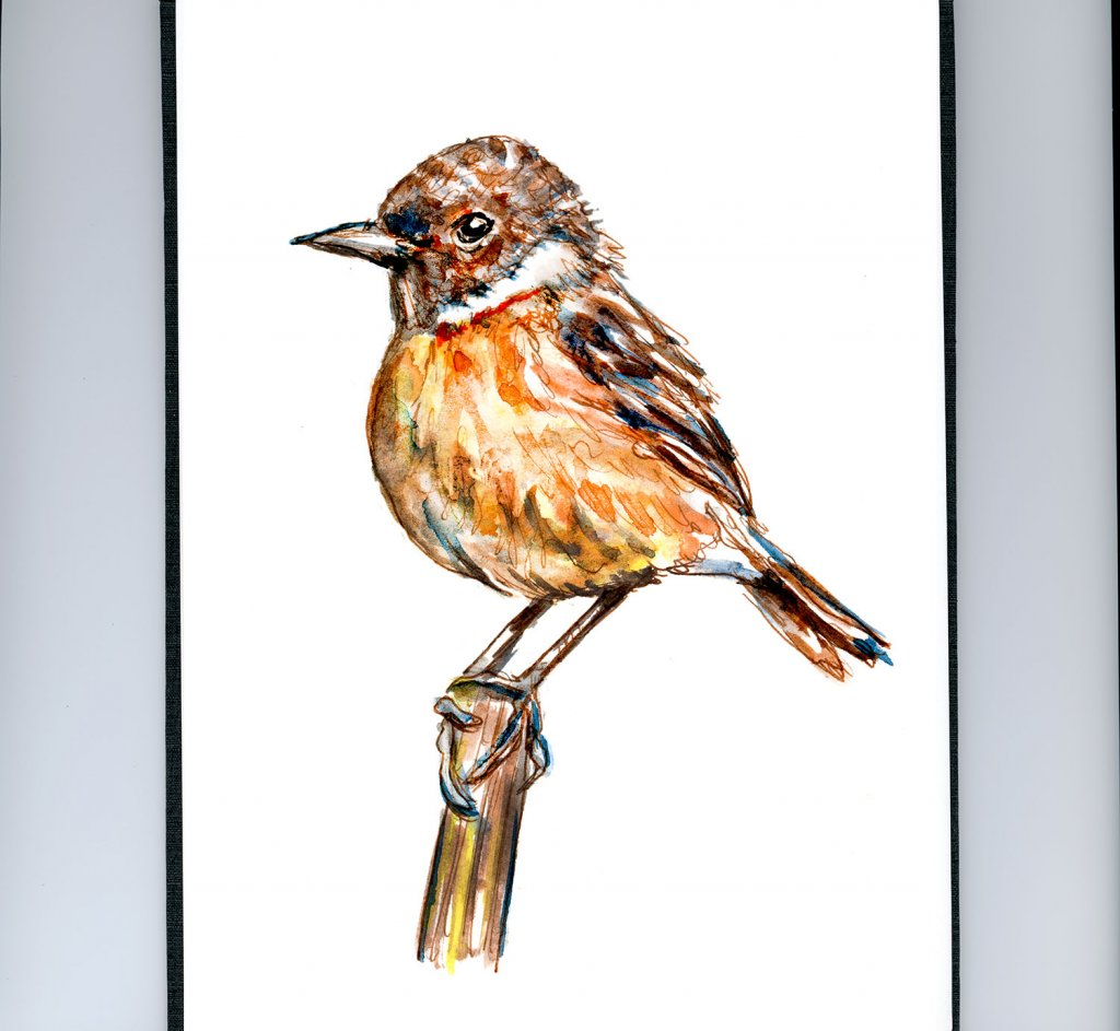 Day 8 - Baby Robin Learning To Fly - Doodlewash