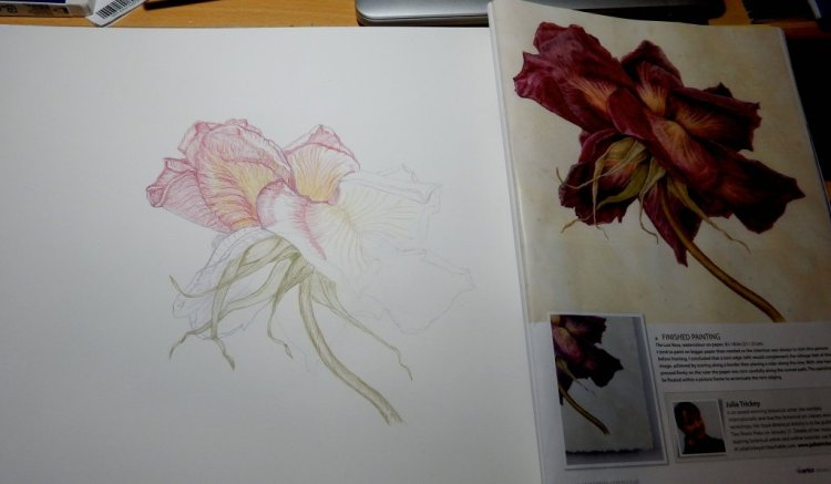 FADED ROSE 2ND PICTURE WITH COLOURED PENCILS from THE ARTISTS Mag original painting by Julia Trickey