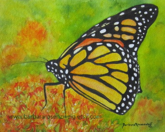 Butterfly Monarch Watercolor by Barbara Rosenzweig - Doodlewash