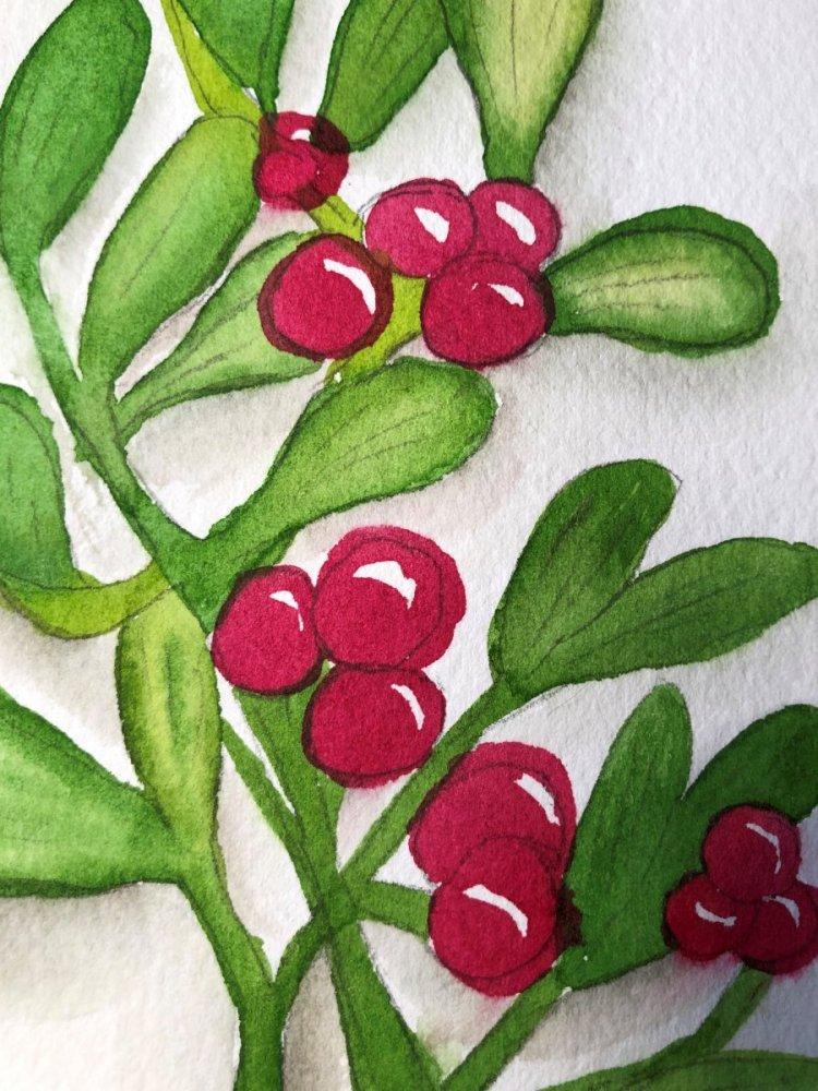 Mistletoe goes red! IMG_3826