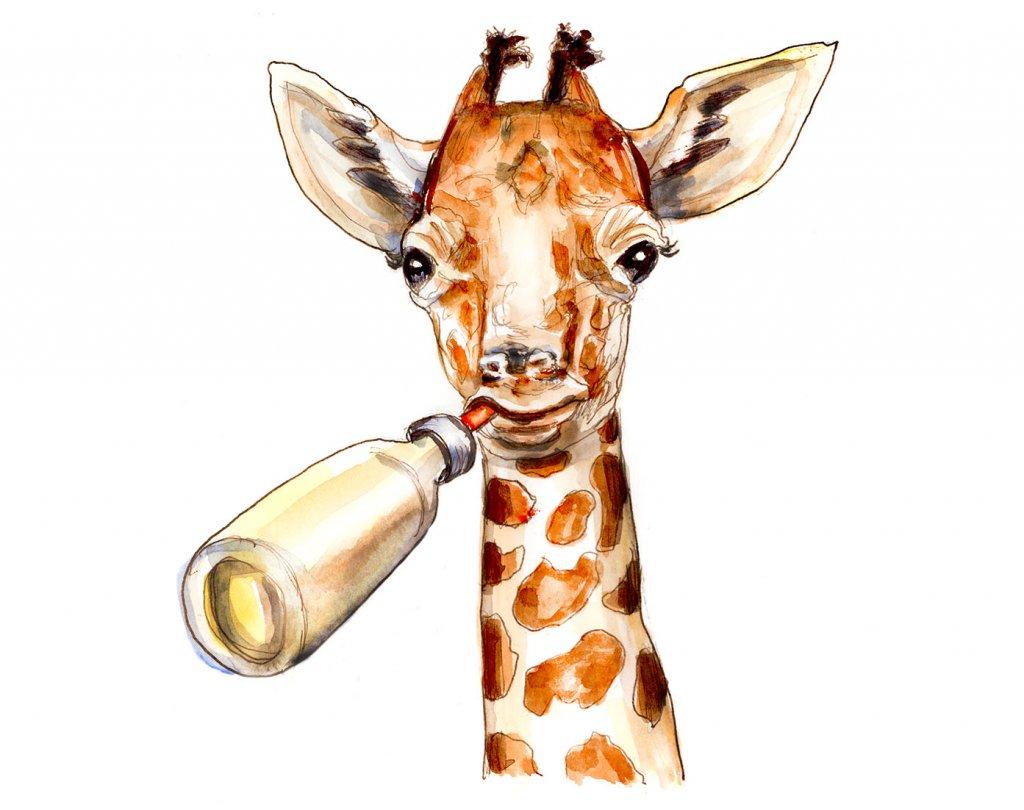 Day 12 - Baby Giraffe Illustration - Doodlewash