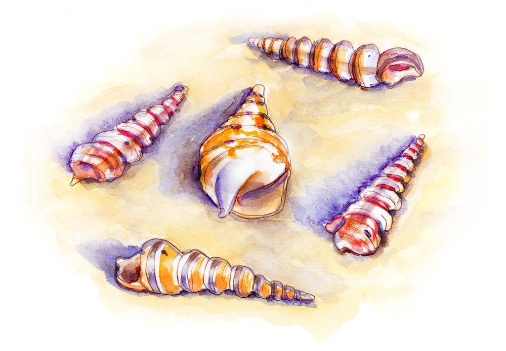 Day 28 - Unicorn Horn Seashells Turritella Watercolor - Doodlewash