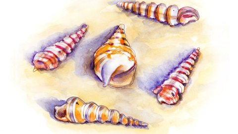 Day 28 - Unicorn Horn Seashells Turritella Watercolor - Doodlewash