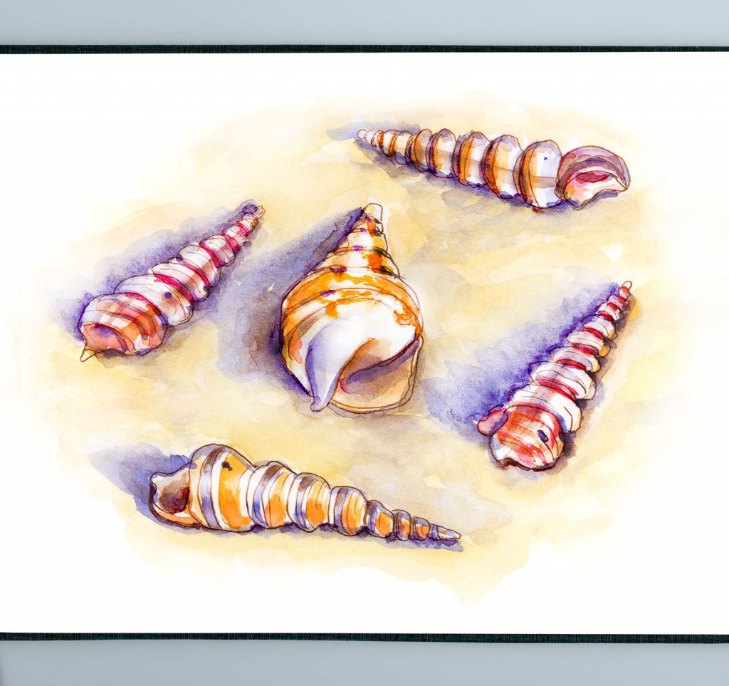 Day 28 - Unicorn Horn Seashells Turritella Watercolor - Sketchbook - Doodlewash