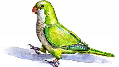 Day 8 - Parrot Watercolor Illustration - Doodlewash