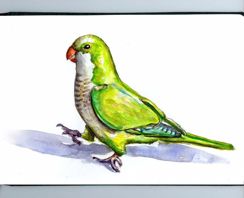Day 8 - Parrot Watercolor Illustration - Sketchbook Detail - Doodlewash