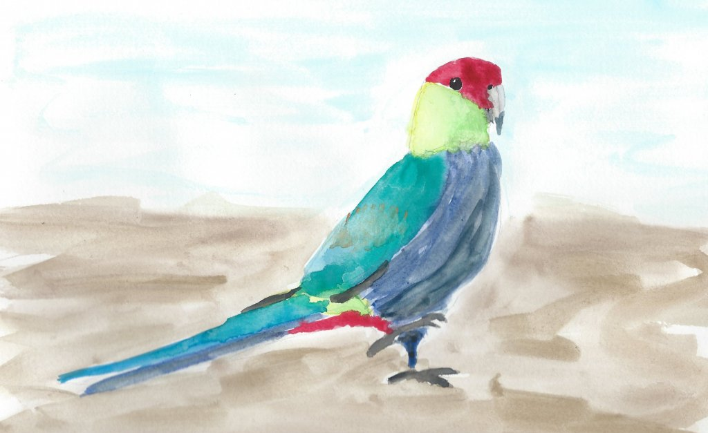 Red-capped parrot taking a walk (from photo by William Betts) #doodlewashJanuary2019 Day 8: Parrots