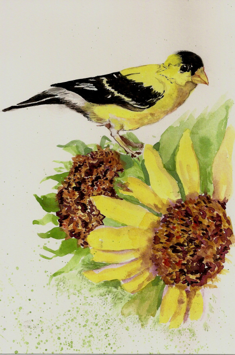 Goldfinch on a sunflower from a photo in Birds and Blooms magazine goldfinch-in-sunflowers1