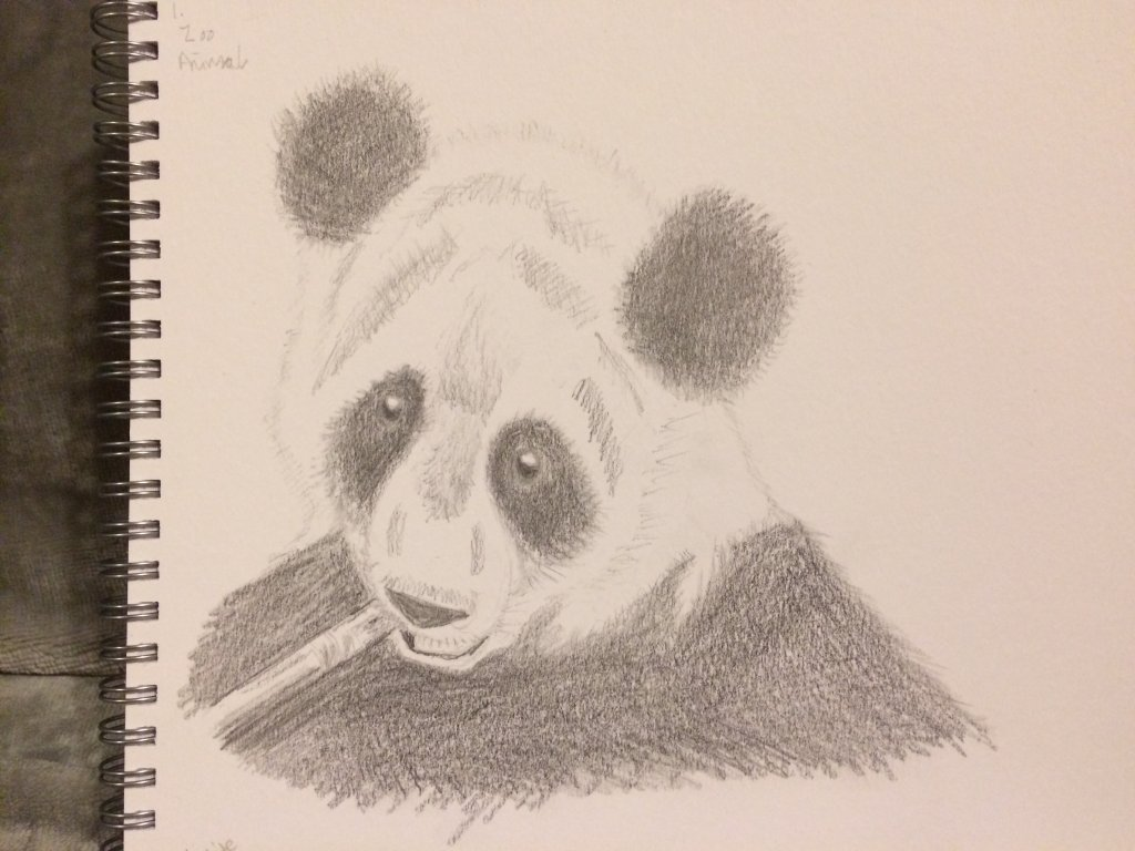 🐼 Panda – Zoo animal For day 1! It needs a bit more work on the shading but here's t