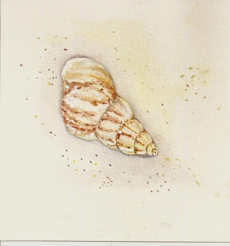 Sea Shell sea-shell-3