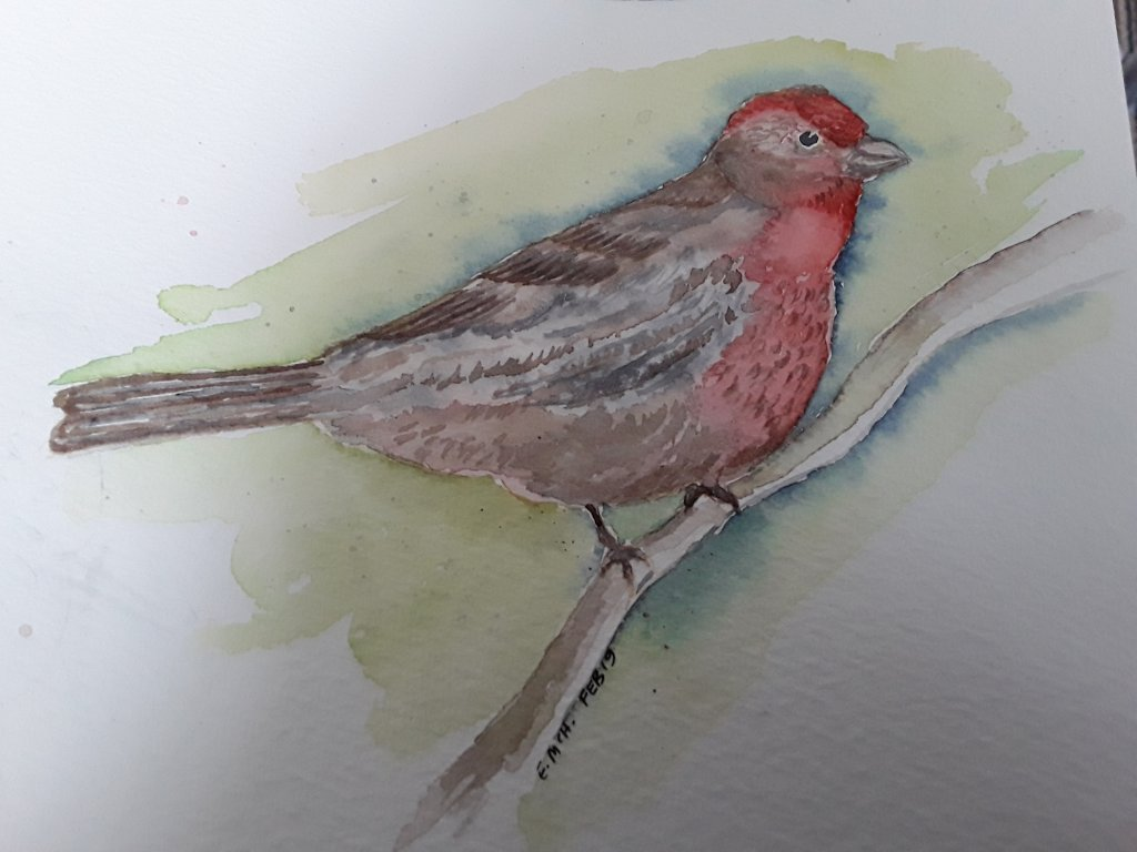 Day 8- bird. This is a finch. #doodlewashFebruary2019 #WorldWatercolourGroup 20190211_120549