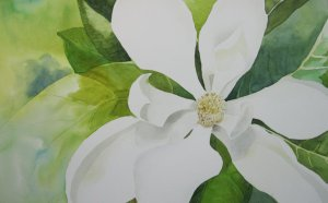 Day 10: magnolia—a very typical beautiful summer bloom here in the Gulf south 6E69DC4B-2293-47F5-9