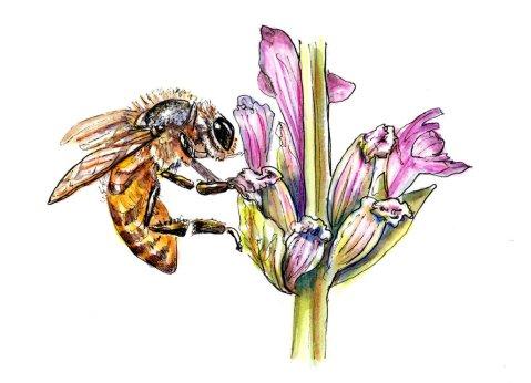 Day 1 - Bee Flower Watercolor - Doodlewash