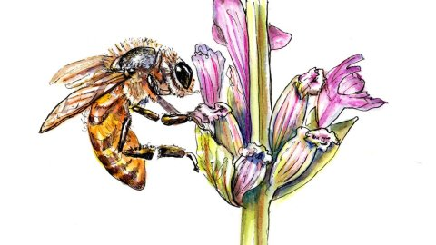 Day 1 - Bee Flower Watercolor - Doodlewash