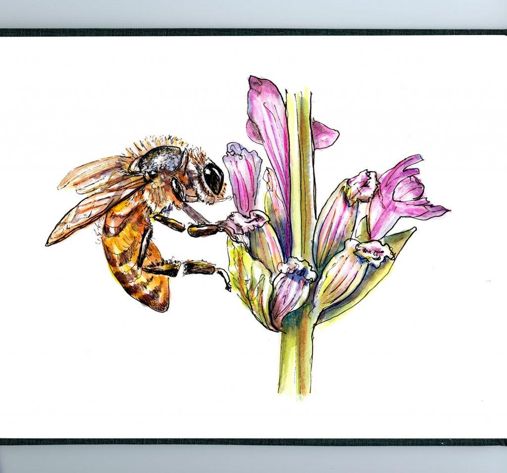 Day 1 - Bee Flower Watercolor - Sketchbook Detail - Doodlewash
