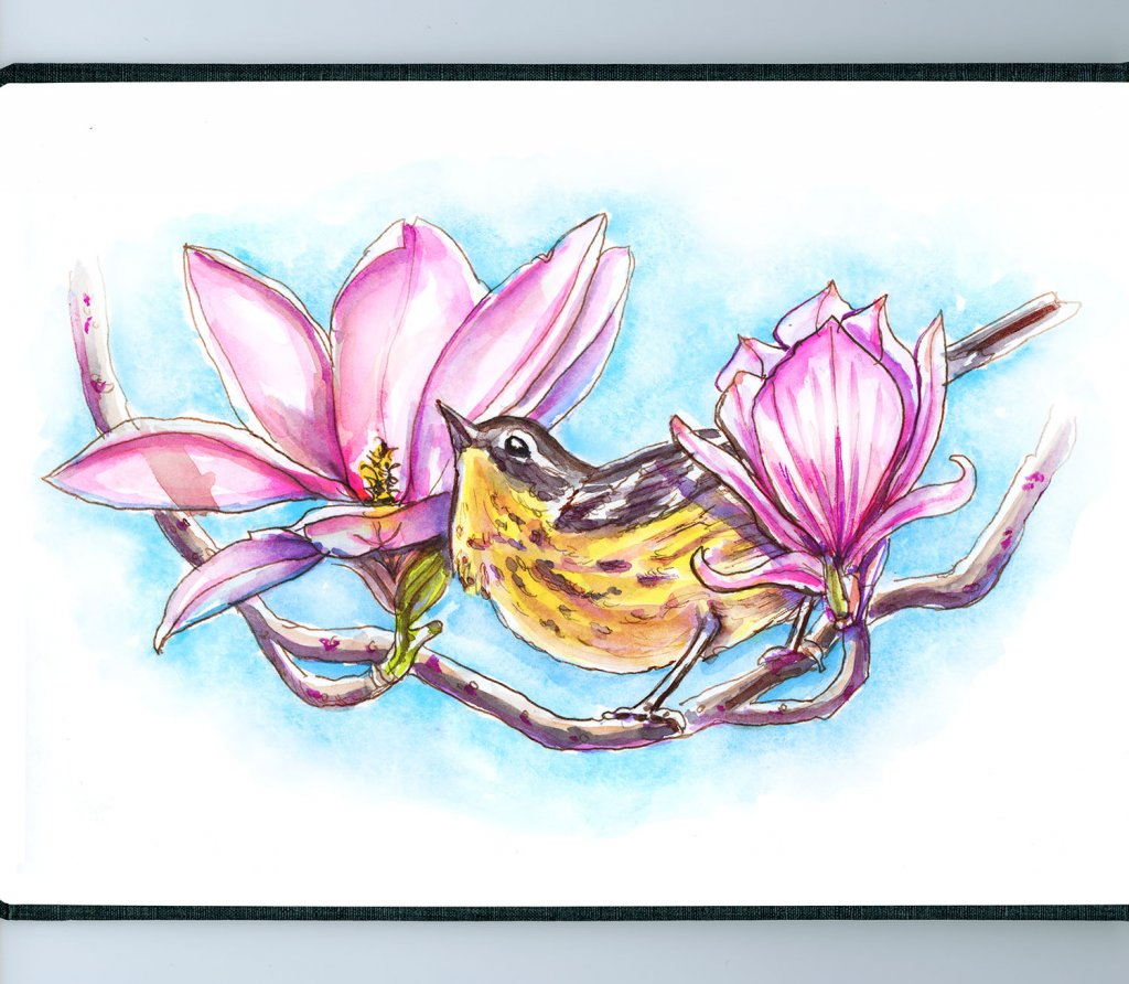 Day 10 - Magnolia Warbler And Flowers Blooms - Sketchbook Detail