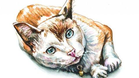 Day 12 - Cat Watercolor Resting - Doodlewash