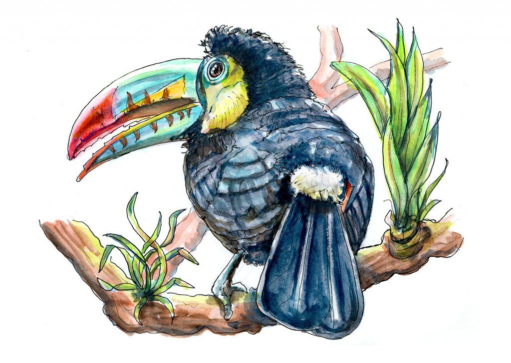 Day 13 - Toucan Rainforest Watercolor - Doodlewash