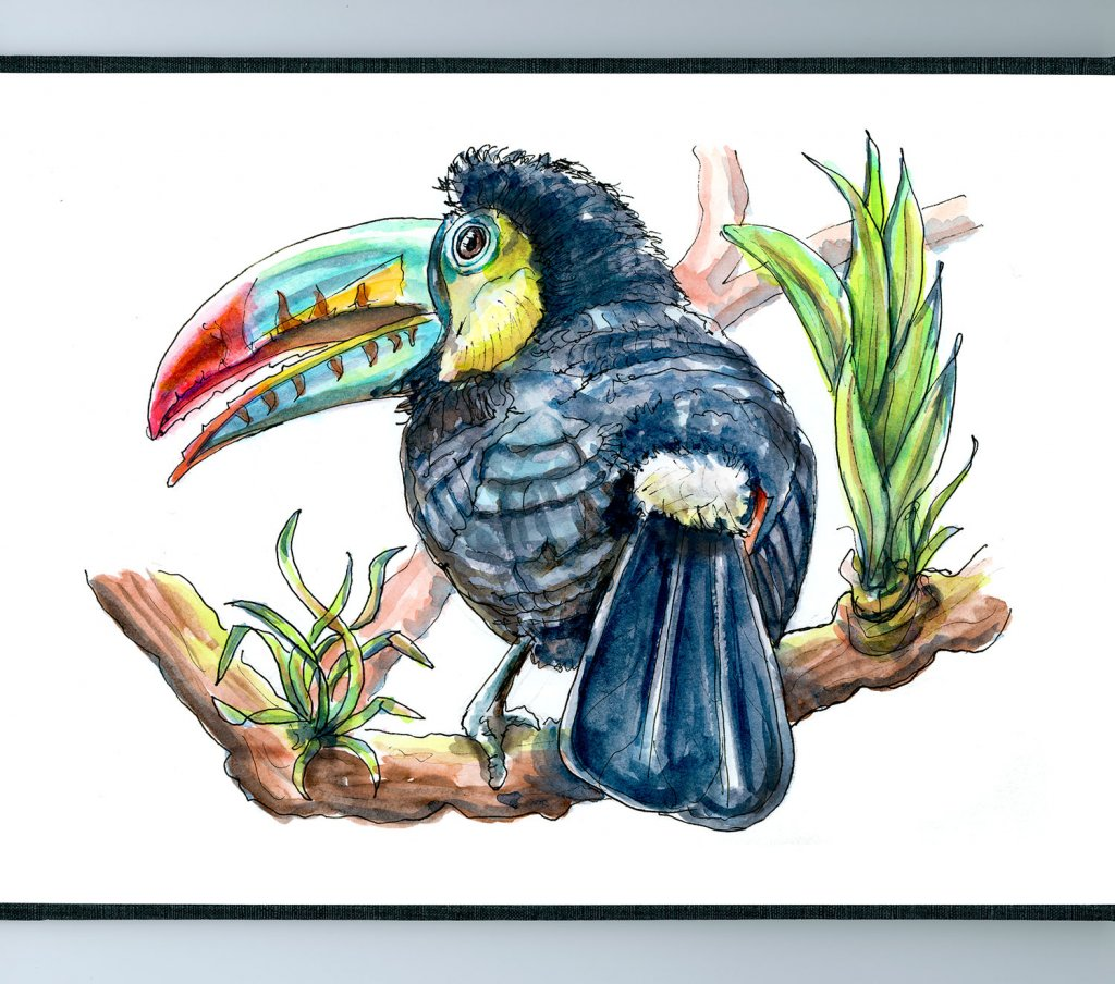 Day 13 - Toucan Rainforest Watercolor - Sketchbook Detail