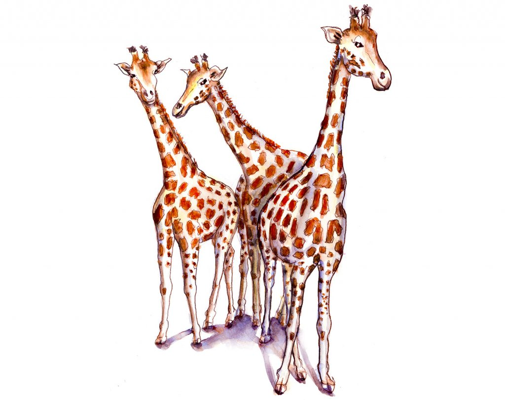 Day 16 - Three Giraffes Watercolor - Doodlewash