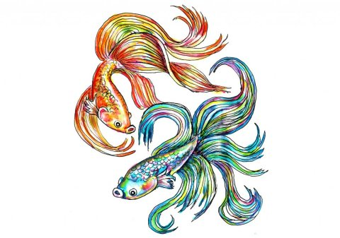 Day 17 - Siamese Fighting Fish Watercolor - Doodlewash