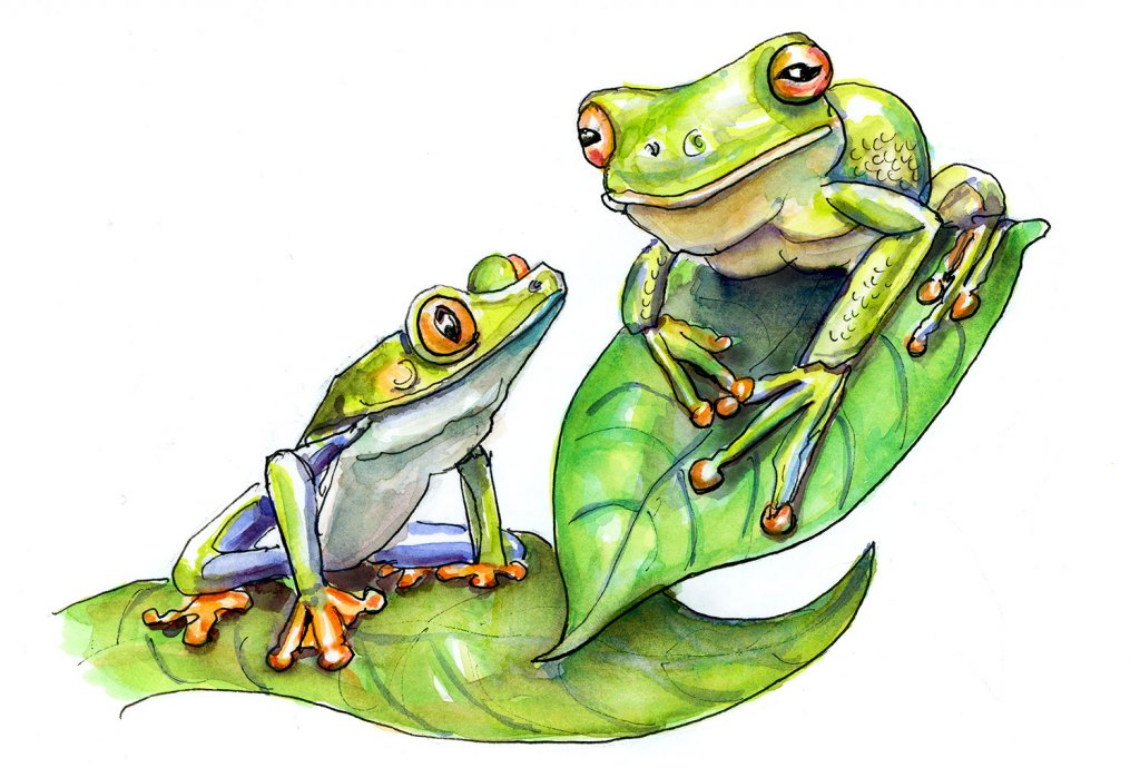 Day 18 - Two Frogs Watercolor - Doodlewash
