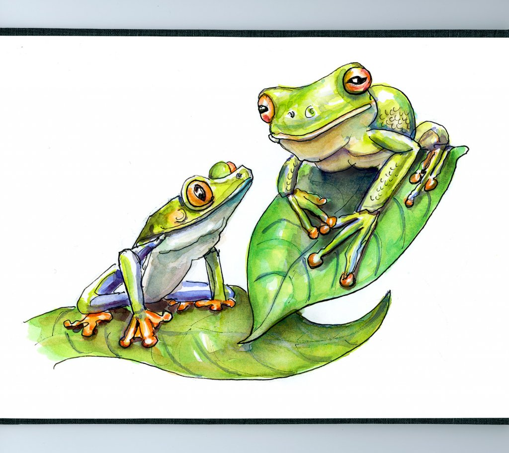 Two Frogs Watercolor - Doodlewash Sketchbook