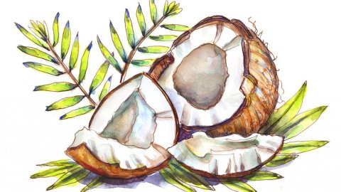Day 19 - Coconuts Watercolor - Doodlewash