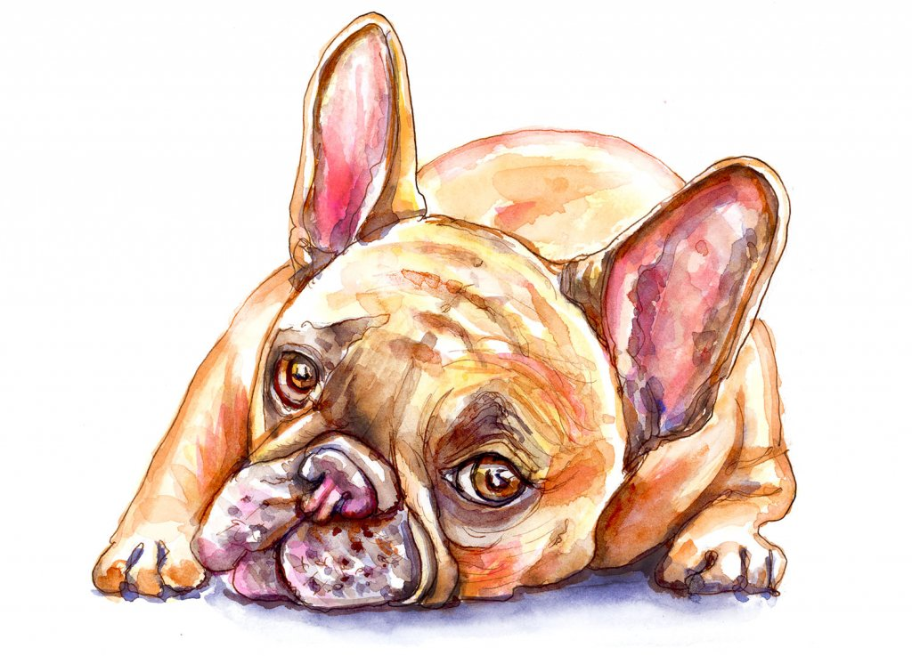 Day 20 - French Bulldog Watercolor - Doodlewash