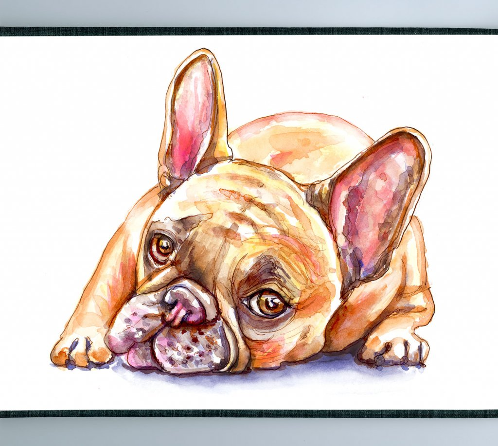French Bulldog Watercolor Detail - Doodlewash