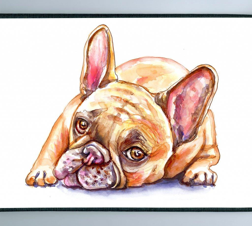 French Bulldog Watercolor Detail - Doodlewash