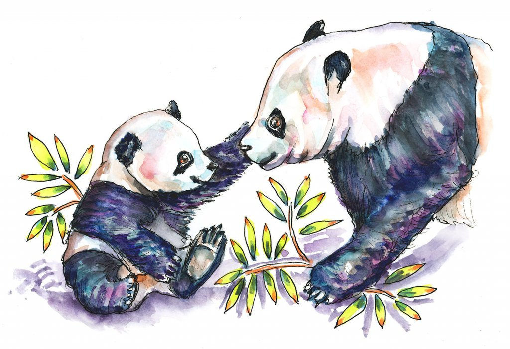 Day 22 - Baby Panda And Mother Watercolor - Doodlewash