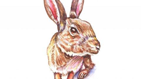 Day 3 - Rabbit Watercolor - Doodlewash