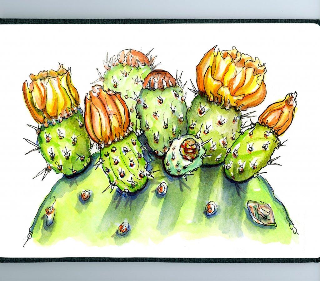 Day 6 - Cactus Watercolor Prickly Pear - Detail - Doodlewash