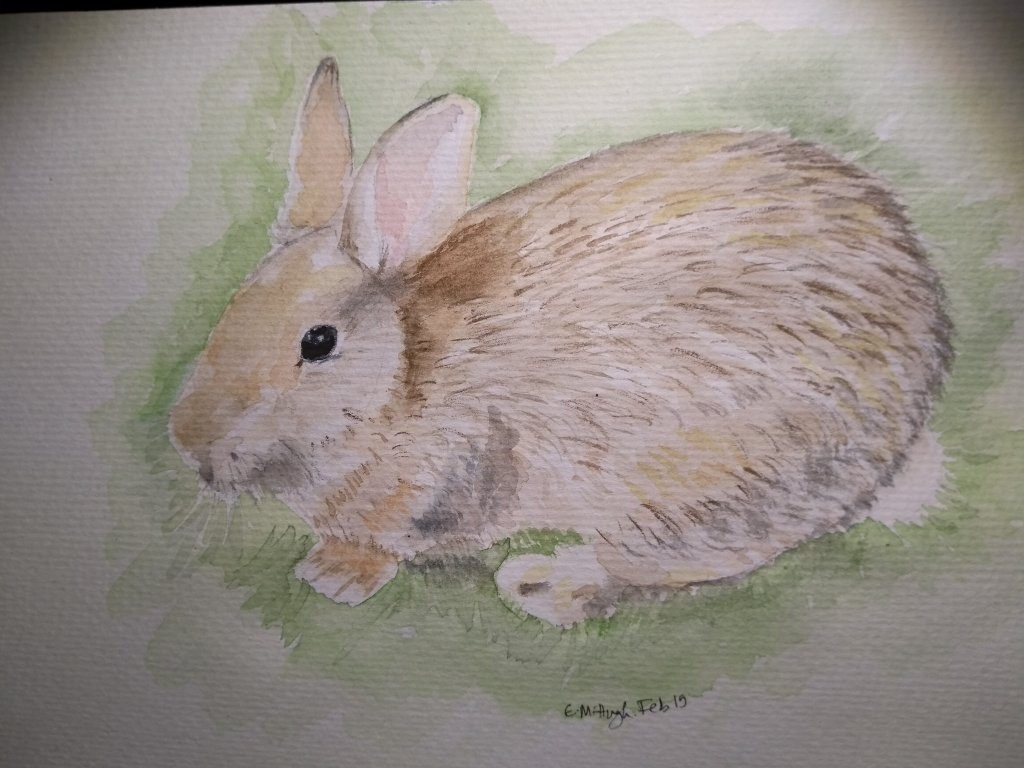 Day 3 – Rabbit. This is one of my daughter\'s pets. #doodlewashFebruary2019 #WorldWaterc