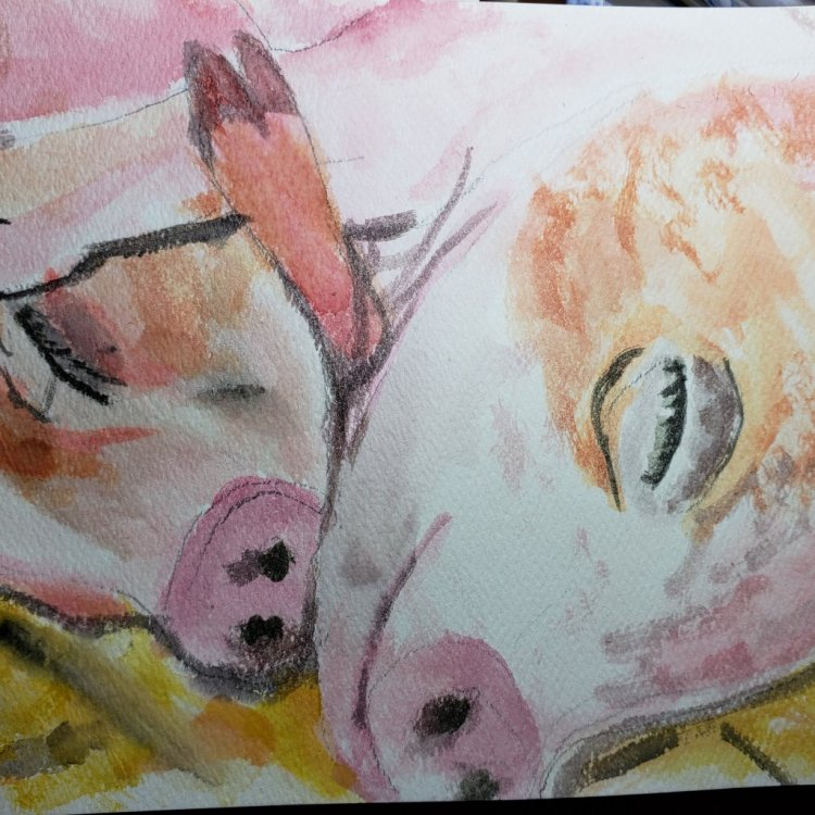 Pigs! Trying out different paper and brushes. It\'s okay. IMG_20190205_164445_233