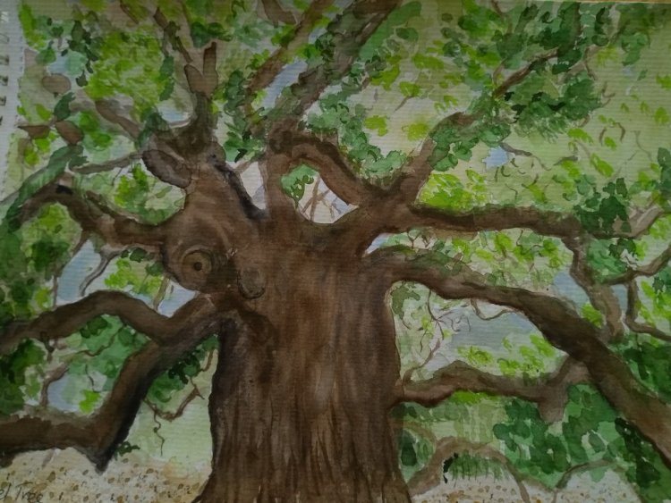 Day 13- Forest. This is Angel Oak tree, reported to be 4-500 years old. It is in Charleston, South C