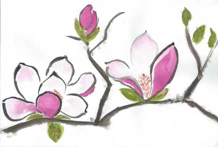 One of my magnolias has pink flowers like this. The other has yellowish flowers that are not so show