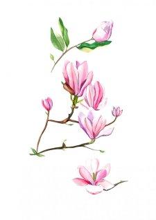 Watercolor Pink Magnolias by Fatima Aslam - Doodlewash