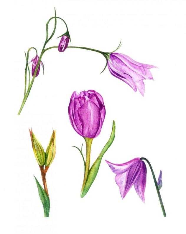 Watercolor Purple Flowers by Fatima Aslam - Doodlewash